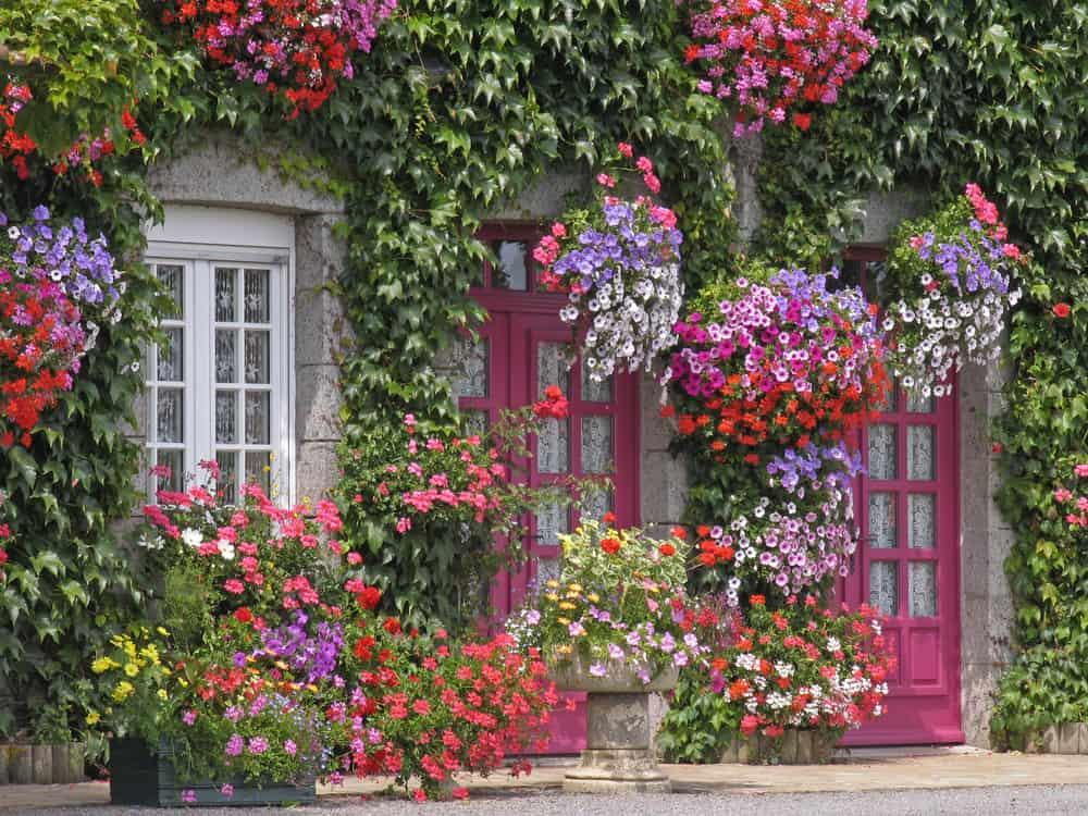 House with flowers in Brittany