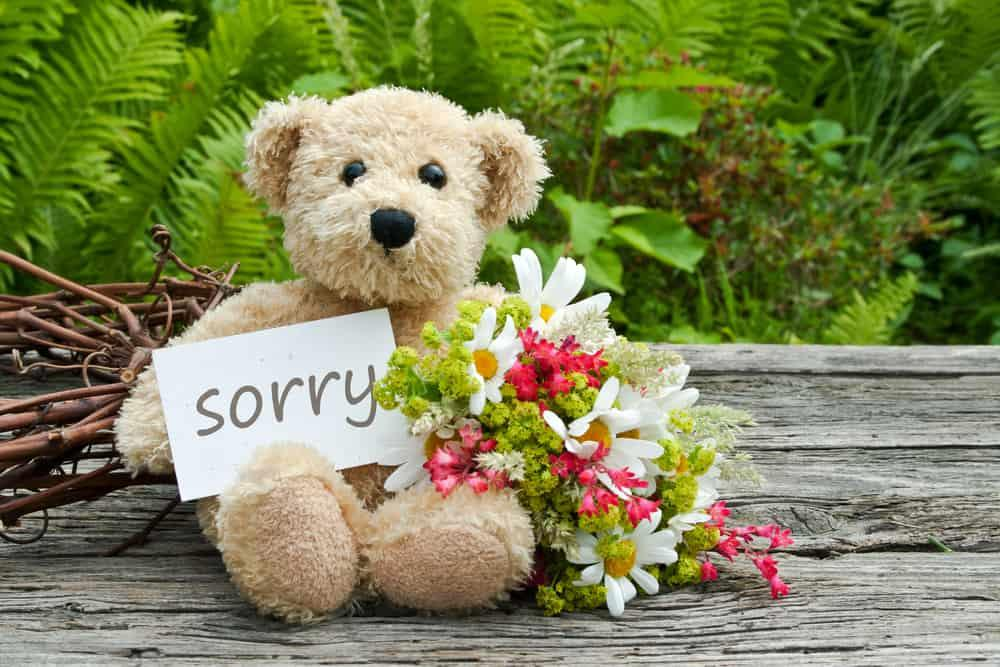 "Bear carrying ""sorry"" sign"
