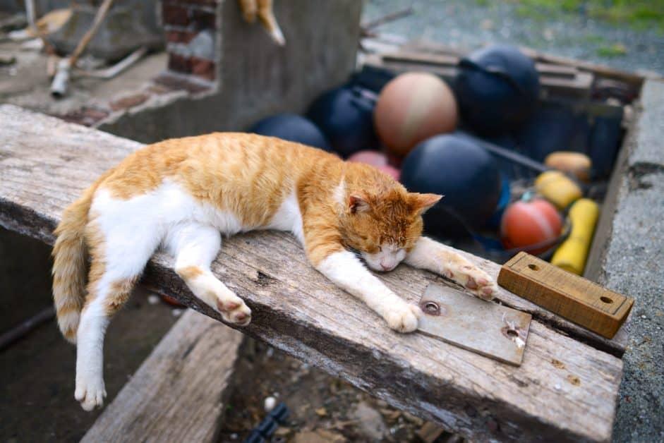 cat sleeping on plank