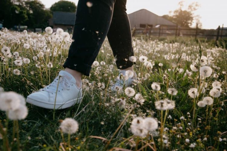 A close-up view of a person's legs and shoes as they walk through a field of fluffy dandelions.