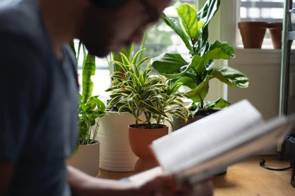 A man in profile in the foreground is slightly blurred so that we can't exactly make out his features. He is reading a book. The background is clear and we see a number of plants and plant pots on a windowsill in a sunny apartment.