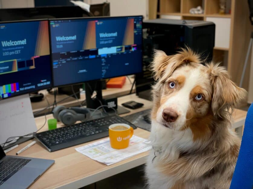 A dog, I believe an Australian shepherd, with blue eyes, turns to stare at the person taking the photo. The dog is sitting in an office chair that we see the back of. In front of him is a desk full of computer monitors. A mug full of coffee sits in front of him, on top of a printout of charts of some kind. The dog looks dedicated to his job.