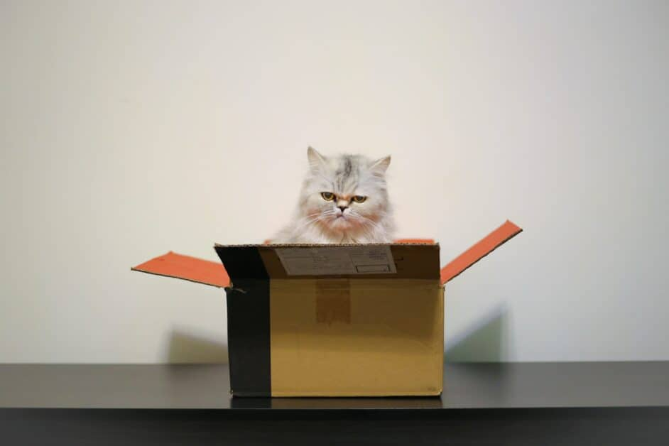 A grumpy, disappointed long-haired white cat sits inside a carboard box, glowering grumpily at the viewer.